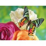 любовь бабочки 5D алмазная живопись цветы dlh1001